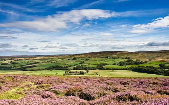 Heather on the North Yorkshire
