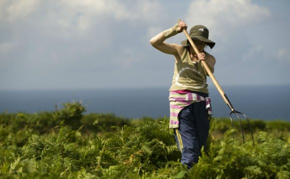 A volunteer clears bracken on