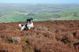 pet friendly self catering cottages in west yorkshire