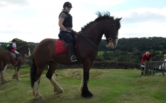 Horses for loan North Yorkshire
