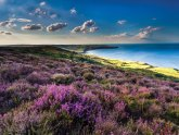 North Yorkshire Moors Walking