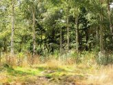 Woodland for sale North Yorkshire