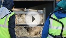 Bird flu farm cull in East Yorkshire